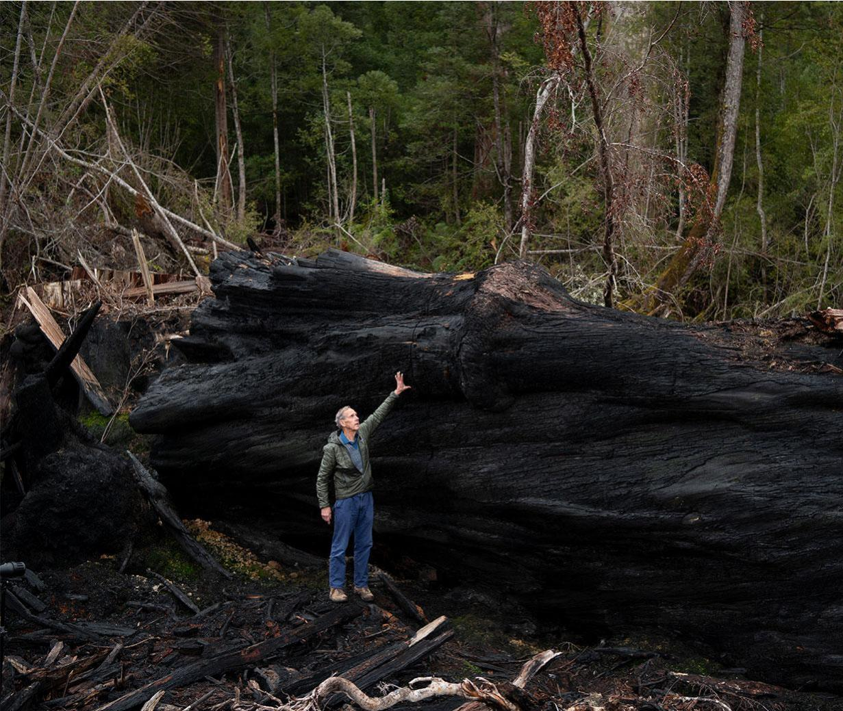 All I want for Christmas is some old growth forest